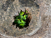 istock Close focus on small green tree grow from cracking area of dying wood 1327900845