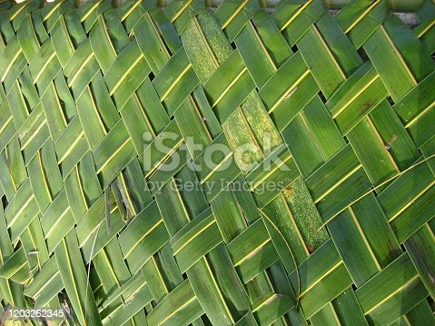istock Close front shot of fresh coconut leaves woven into a mat 1203262345