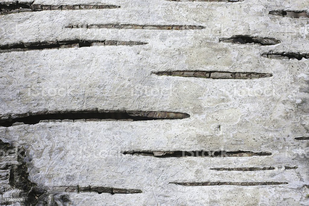 Close up of silver birch bark shows layers stock photo