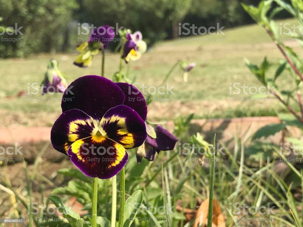 A close look at nature. royalty-free stock photo