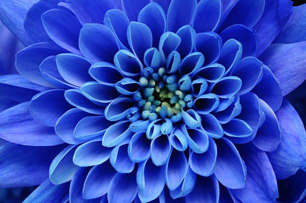 Close of blue flower picture id177347141?b=1&k=6&m=177347141&s=612x612&w=0&h=icrkqhmud0z56zl58dm259n1jfvetp9vogocfkqsv5c=