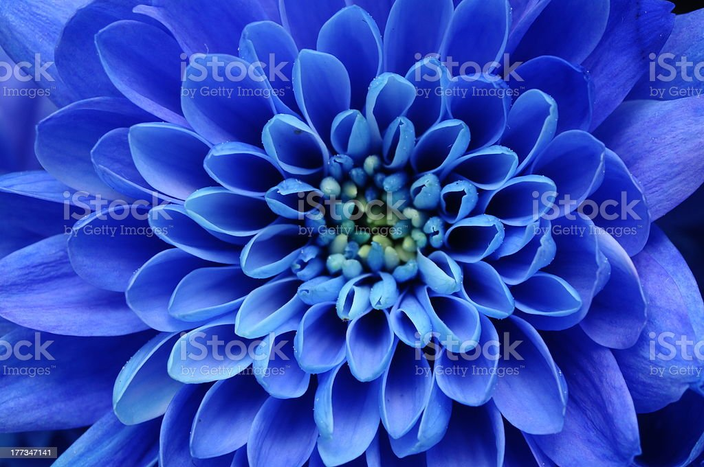 Close of blue flower stock photo
