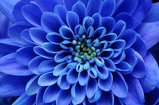 close of blue flower - blomdel bildbanksfoton och bilder