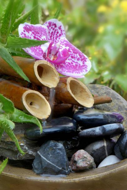 cerca de una flor de orquídea poner en una pequeña fuente decorativa - foto de stock