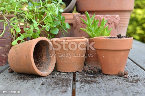 close on terra cotta flower pots with plants and shovel  on a table in garden