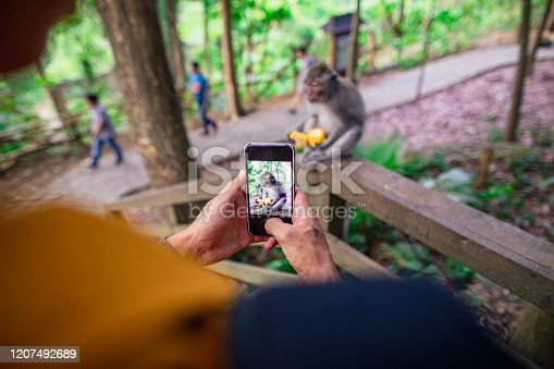 An over the shoulder view of an unidentifiable person taking a picture of a monkey feeding itself in Ubud, Bali, Indonesia.
