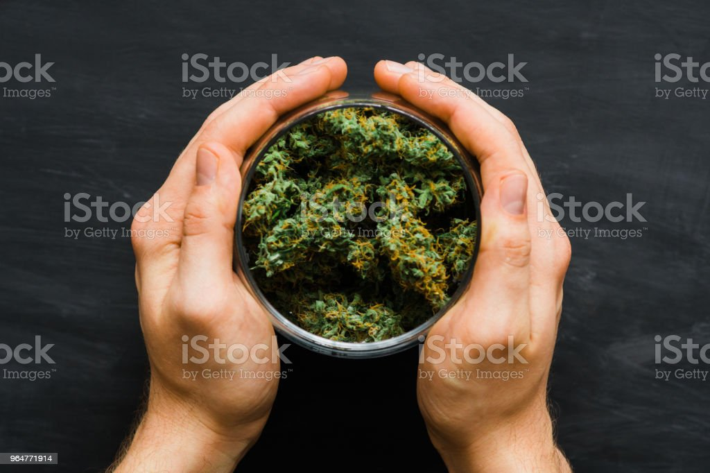 Close up. A bank with fresh buds of cannabis in the hands of a man. A lot of marijuana. Concepts of legalizing weed. Top view. royalty-free stock photo
