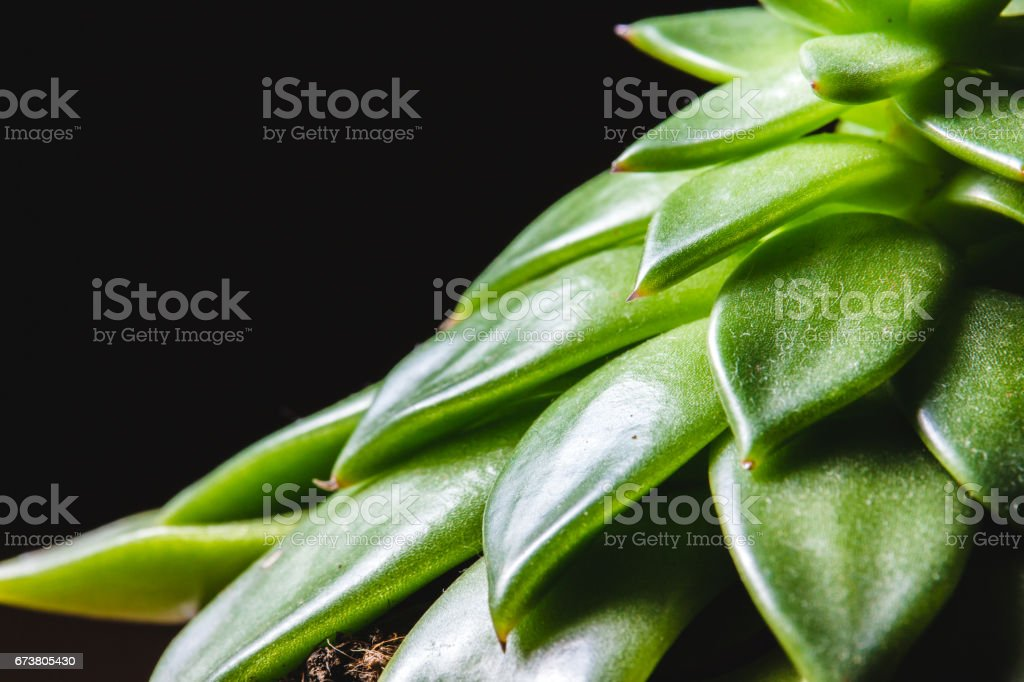 Close up abstract of spiky leaves of a green succulent indoor plant photo libre de droits