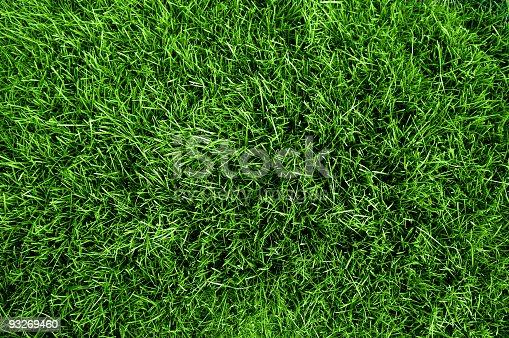 Green grass texture from a soccer field XXL size