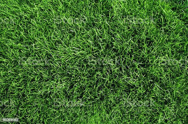 Close up aerial view of the grass on a soccer field picture id93269460?b=1&k=6&m=93269460&s=612x612&h=gchoagdq3fnnb8rf0u6fqmldwdjbeed0liurcjn2kzg=