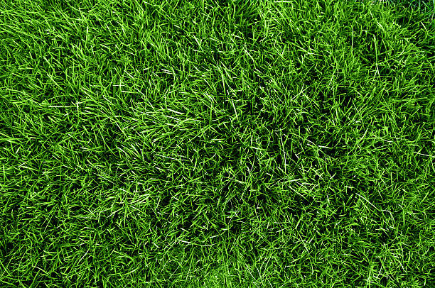 close up aerial view of the grass on a soccer field  - çim stok fotoğraflar ve resimler