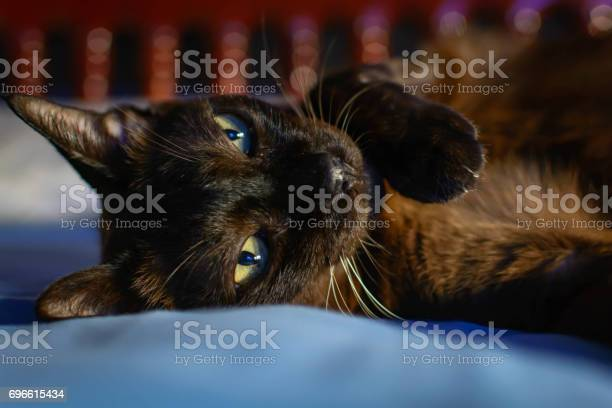 Close up animal brown cat sleeping in bed and light bokeh background picture id696615434?b=1&k=6&m=696615434&s=612x612&h=igajbkamvnkqpztp6zgxt3edzmoqyhin2omofzz8bdw=