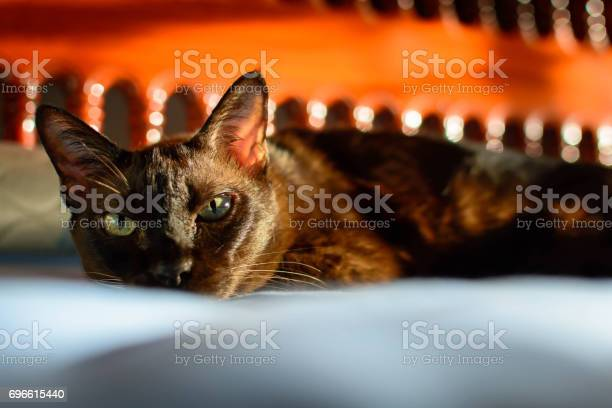 Close up animal brown cat sleeping in bed and light bokeh background picture id696615440?b=1&k=6&m=696615440&s=612x612&h=yjmhv5dqnencxtxht8tacbhxobceg65todgvcvsuq40=