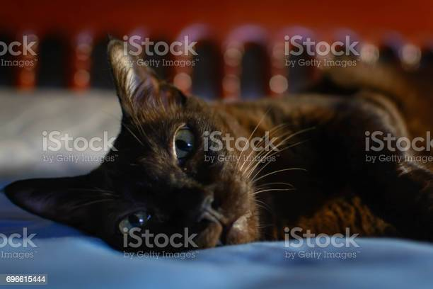 Close up animal brown cat sleeping in bed and light bokeh background picture id696615444?b=1&k=6&m=696615444&s=612x612&h=f26upiqkakj0xn2gtfz4wewa5uarylujnetdodyqlzg=