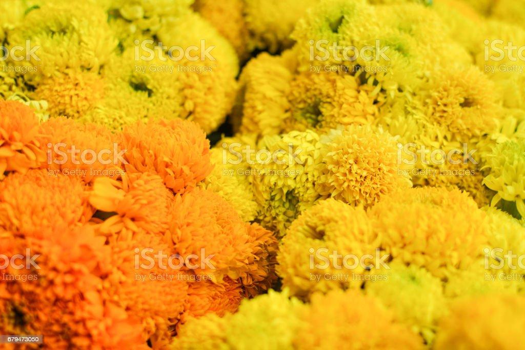 Close up arigold background 免版稅 stock photo