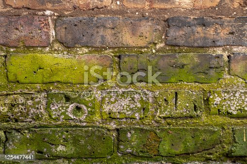 Close up background wall texture of old weathered common clay brick masonry with green moss and efflorescence on lower half of image.