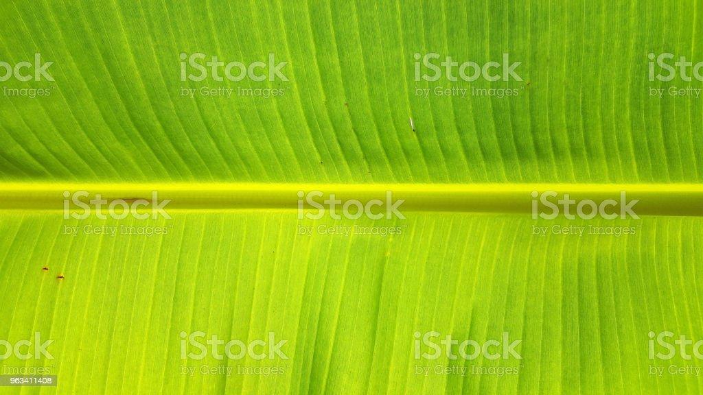 närbild banana leaf textur - Royaltyfri Asymmetri Bildbanksbilder