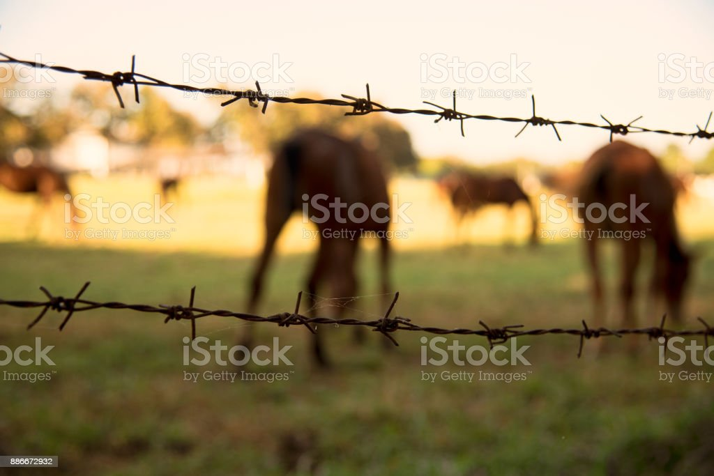 Close up Barbed Wire for the horse area stock photo
