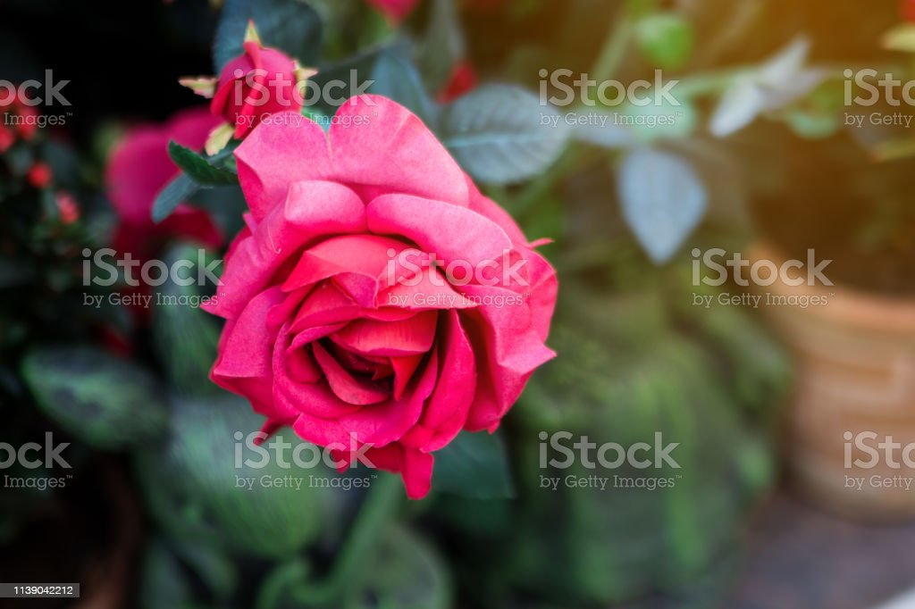 Close Up Beautiful Red Roses Bouquet Against Green Blur