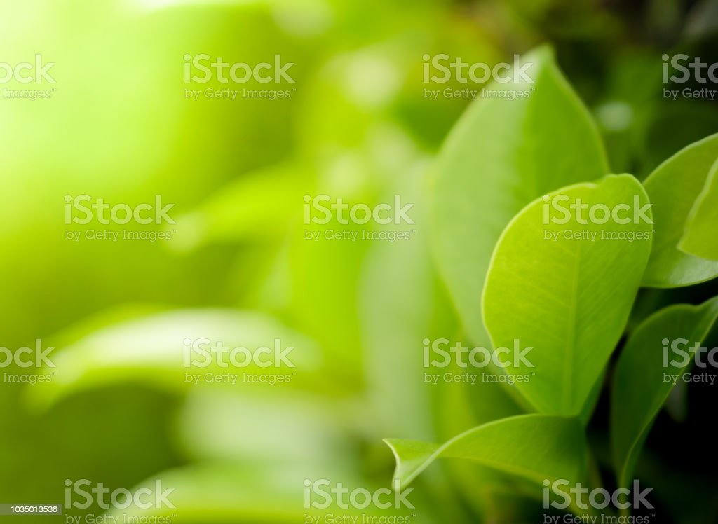 Close up beautiful view of natural green leaves on greenery blurred background and sunlight in public garden park foto stock royalty-free
