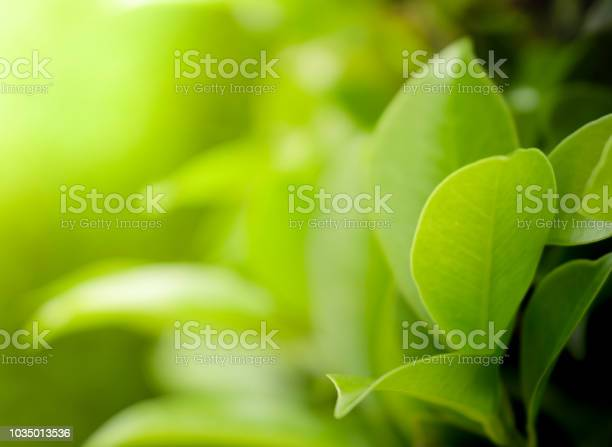 Close up beautiful view of natural green leaves on greenery blurred picture id1035013536?b=1&k=6&m=1035013536&s=612x612&h=chtem g1ru3mnjmvkhqmfwfxdv d81afveadohzbuli=