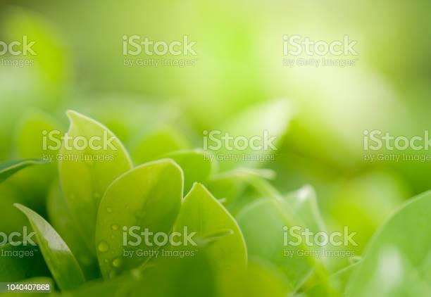 Close up beautiful view of natural green leaves on greenery blurred picture id1040407668?b=1&k=6&m=1040407668&s=612x612&h=77pwhau0h zwni7ytdhvm9cru1gormz0djvyl73ej3s=