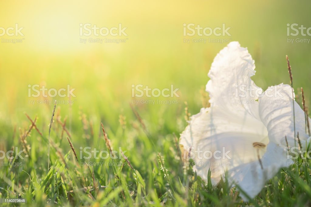 Close Up Beautiful View Of Nature Green Grass On Blurred Greenery