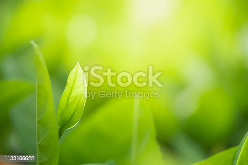 639809128istockphoto Close up beautiful view of nature green leaves on blurred greenery tree background with sunlight in public garden park. It is landscape ecology and copy space for wallpaper and backdrop. 1133166622