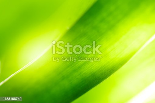 639809128istockphoto Close up beautiful view of nature green leaves on blurred greenery tree background with sunlight in public garden park. It is landscape ecology and copy space for wallpaper and backdrop. 1133166742