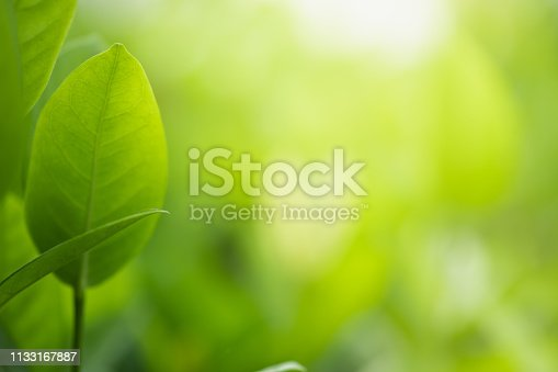 639809128istockphoto Close up beautiful view of nature green leaves on blurred greenery tree background with sunlight in public garden park. It is landscape ecology and copy space for wallpaper and backdrop. 1133167887