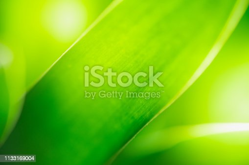 639809128istockphoto Close up beautiful view of nature green leaves on blurred greenery tree background with sunlight in public garden park. It is landscape ecology and copy space for wallpaper and backdrop. 1133169004