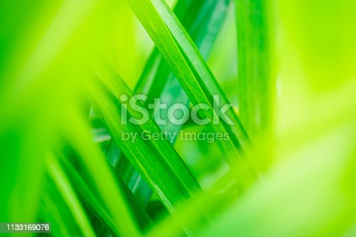 639809128istockphoto Close up beautiful view of nature green leaves on blurred greenery tree background with sunlight in public garden park. It is landscape ecology and copy space for wallpaper and backdrop. 1133169076
