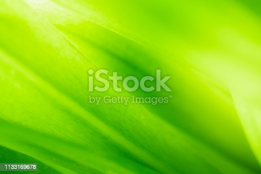 639809128istockphoto Close up beautiful view of nature green leaves on blurred greenery tree background with sunlight in public garden park. It is landscape ecology and copy space for wallpaper and backdrop. 1133169678