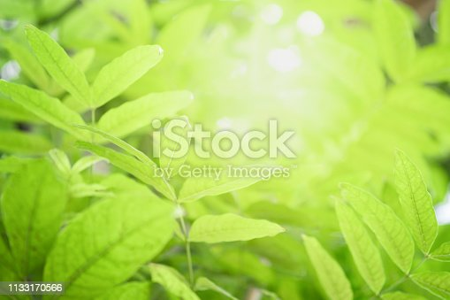 639809128istockphoto Close up beautiful view of nature green leaves on blurred greenery tree background with sunlight in public garden park. It is landscape ecology and copy space for wallpaper and backdrop. 1133170566
