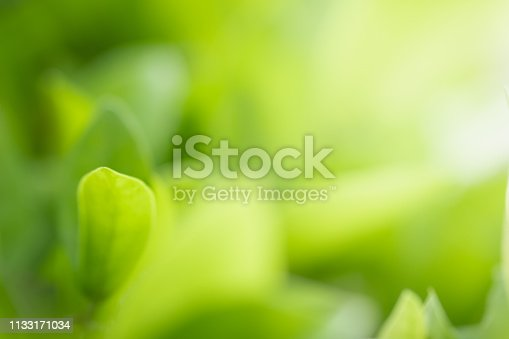 639809128istockphoto Close up beautiful view of nature green leaves on blurred greenery tree background with sunlight in public garden park. It is landscape ecology and copy space for wallpaper and backdrop. 1133171034