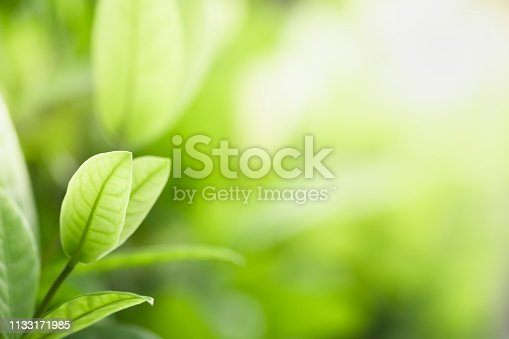 639809128istockphoto Close up beautiful view of nature green leaves on blurred greenery tree background with sunlight in public garden park. It is landscape ecology and copy space for wallpaper and backdrop. 1133171985
