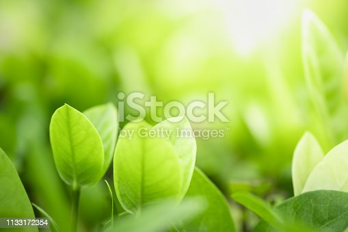639809128istockphoto Close up beautiful view of nature green leaves on blurred greenery tree background with sunlight in public garden park. It is landscape ecology and copy space for wallpaper and backdrop. 1133172354