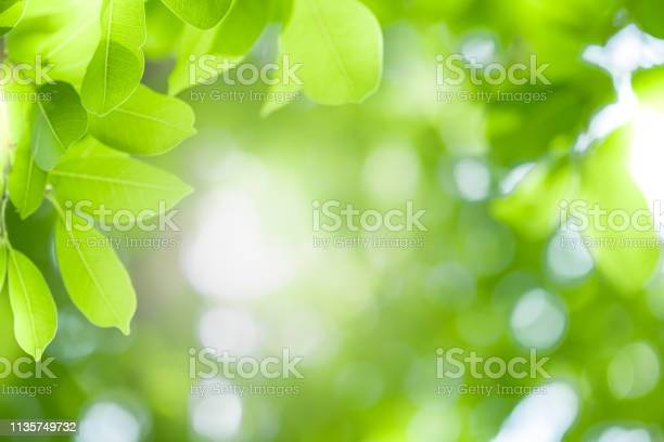 Photo of Close up beautiful view of nature green leaves on blurred greenery tree background with sunlight in public garden park. It is landscape ecology and copy space for wallpaper and backdrop.