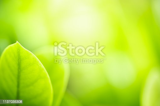 639809128istockphoto Close up beautiful view of nature green leaves on blurred greenery tree background with sunlight in public garden park. It is landscape ecology and copy space for wallpaper and backdrop. 1137035308