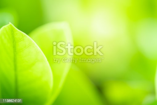 639809128istockphoto Close up beautiful view of nature green leaves on blurred greenery tree background with sunlight in public garden park. It is landscape ecology and copy space for wallpaper and backdrop. 1138624131