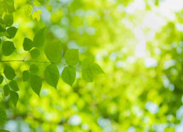 公共のガーデンパークで太陽の光とぼやけた緑の木の背景に自然の緑の葉の美しい景色を閉じます。これは、壁紙や背景のための景観生態学とコピースペースです。 - 木漏れ日 ストックフォトと画像