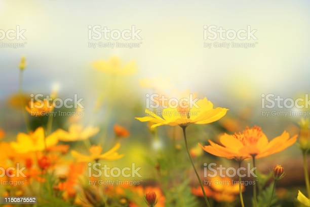 Photo of close up beautiful yellow flower and blue sky blur landscape natural outdoor background