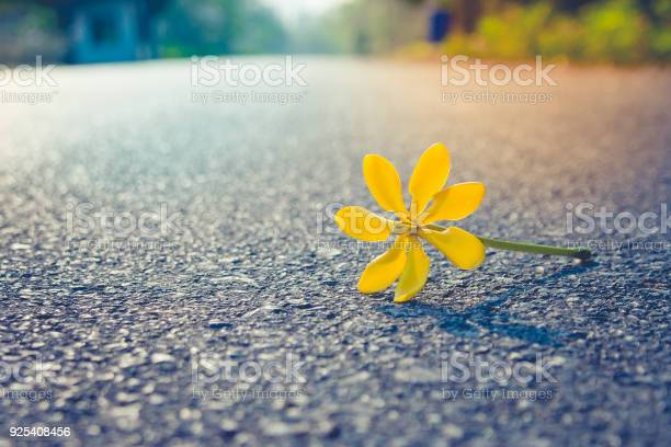 Close up beautiful yellow flower falling on road with sunlight in picture id925408456?b=1&k=6&m=925408456&s=612x612&h=2jbin vpxudghtidazughgm8kf04ppy vkqahinngxw=