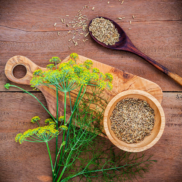 Close up blossoming branch of fennel and dried fennel seeds. – Foto
