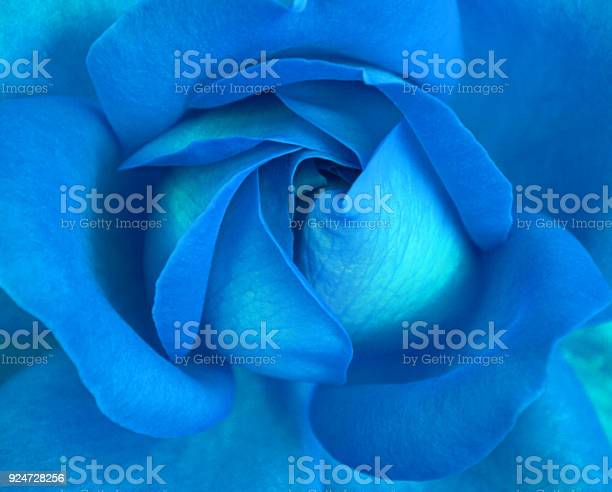 Close up blue rose picture id924728256?b=1&k=6&m=924728256&s=612x612&h=czbx2knbre xqggorj4q215wz0mulork pxgychliko=
