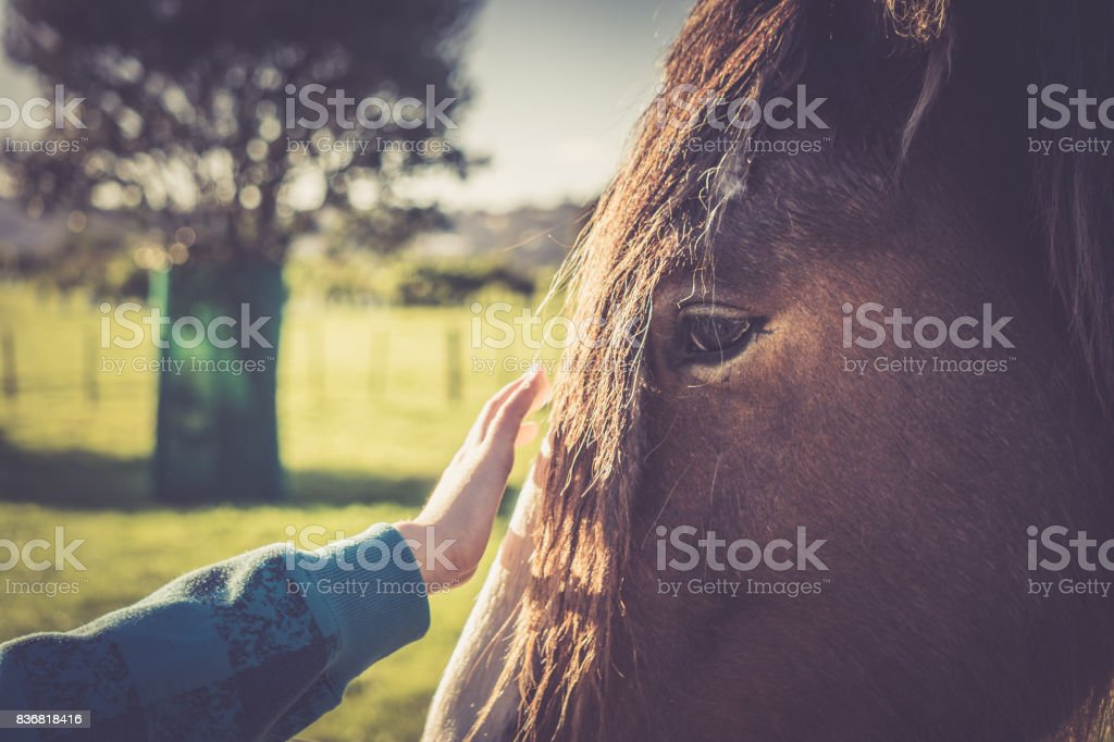 Close Up Boy Reaching To Touch Clysdale Horse Stock Photo Download Image Now Istock
