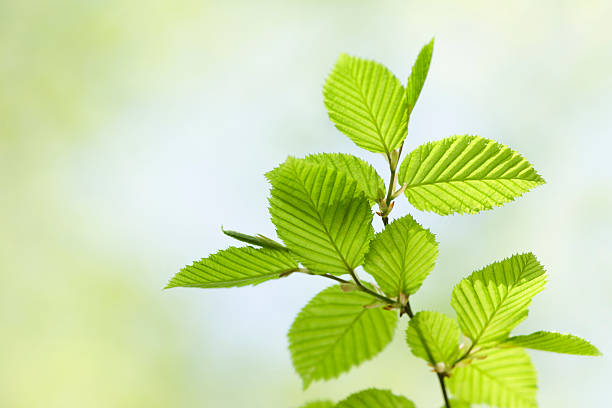 Close up candid of vibrant green leaves in spring stock photo