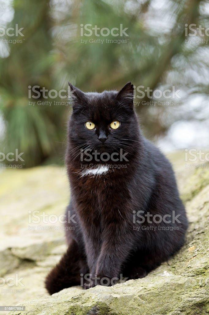 close up cat portrait stock photo