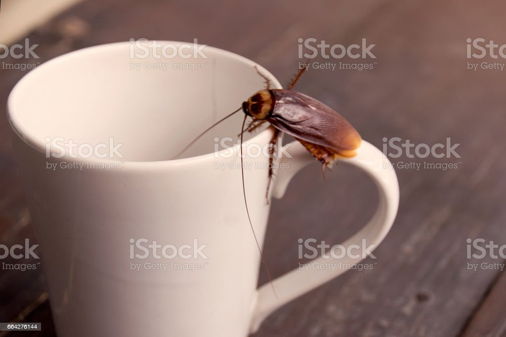 Close up cockroach on white cup drink - foto stock