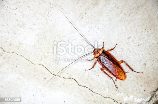 istock Close up cockroach 186302555